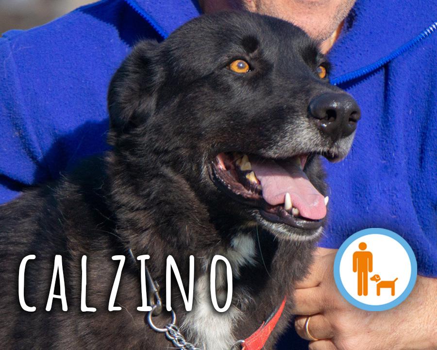 Calzino_profilo