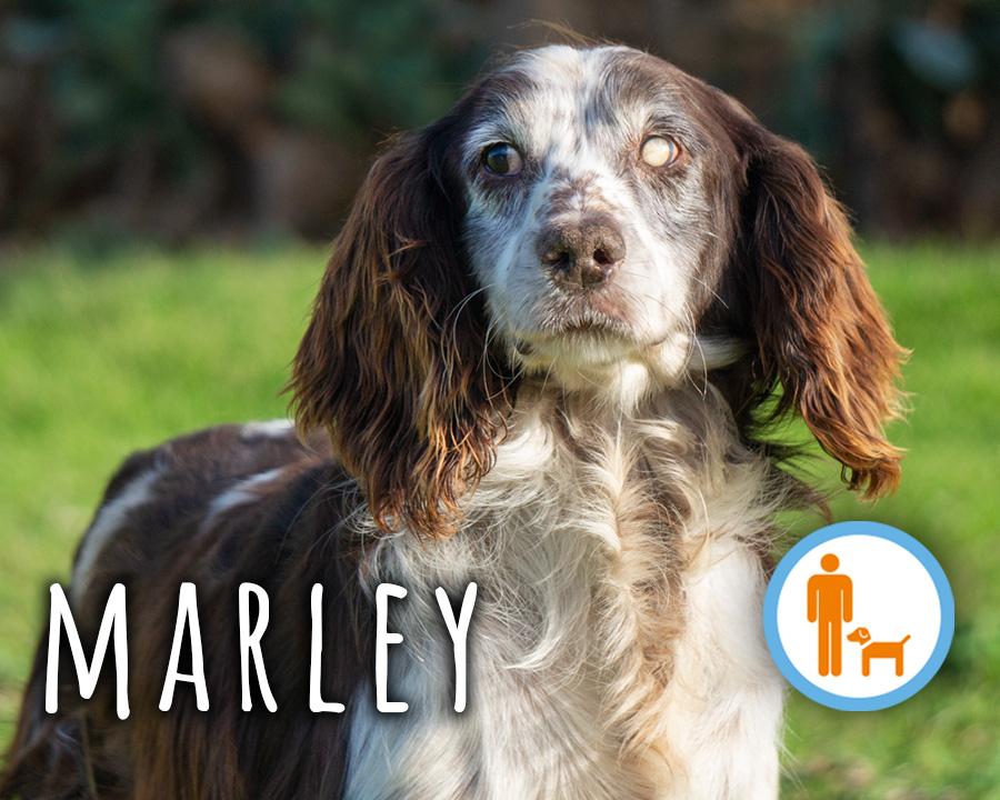 Marley_profilo
