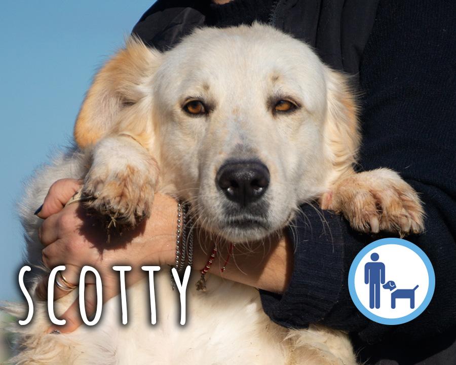 Scotty_profilo_2