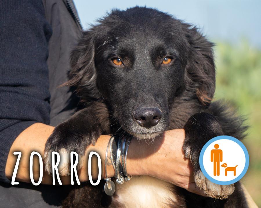 Zorro-profilo