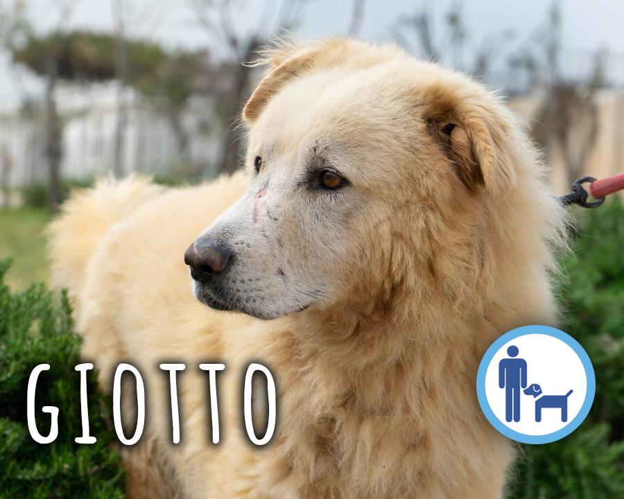 Giotto_profilo