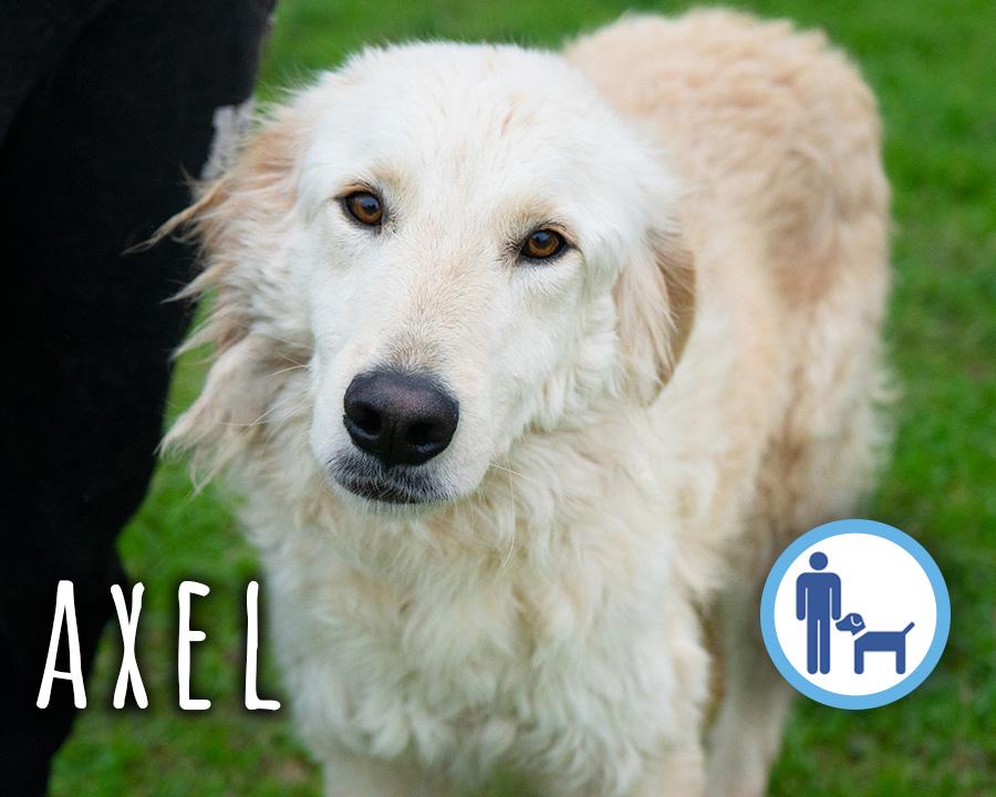 Axel_profilo