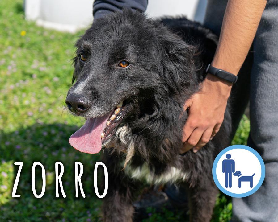 Zorro_profilo