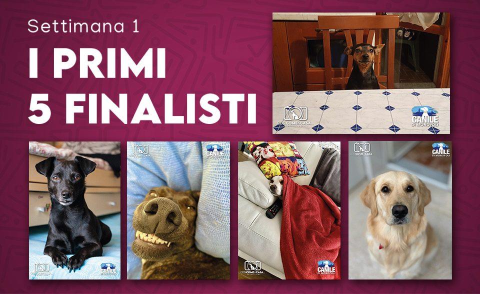 profilo_finalisti