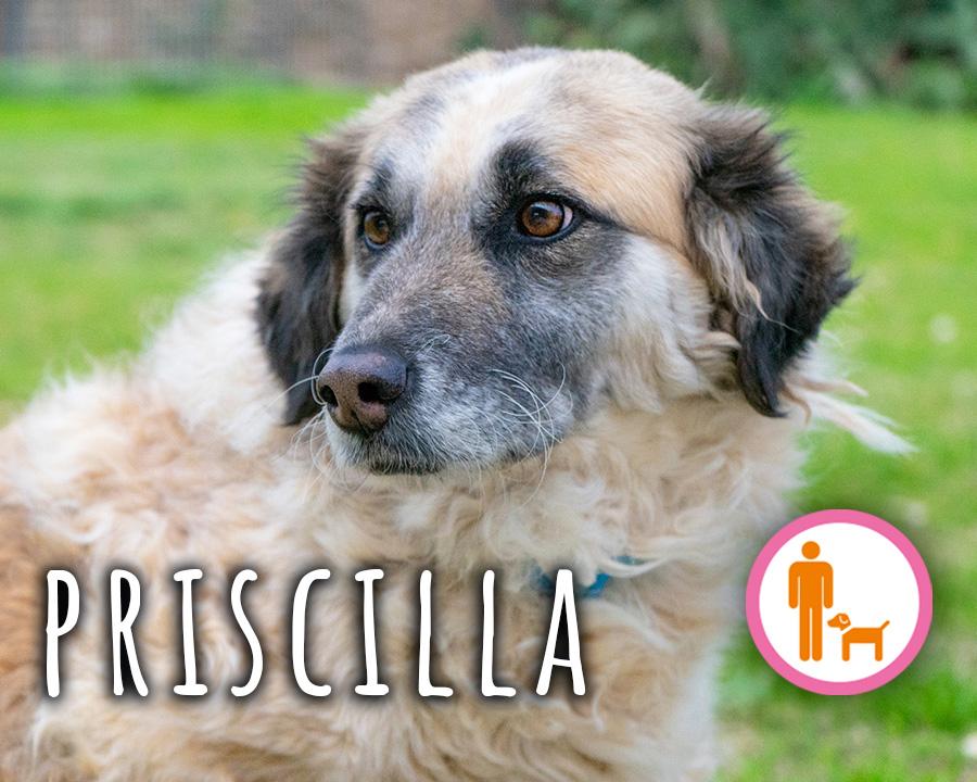 Priscilla_profilo