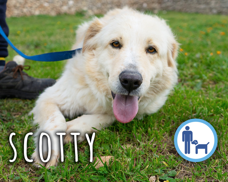 Scotty-profilo