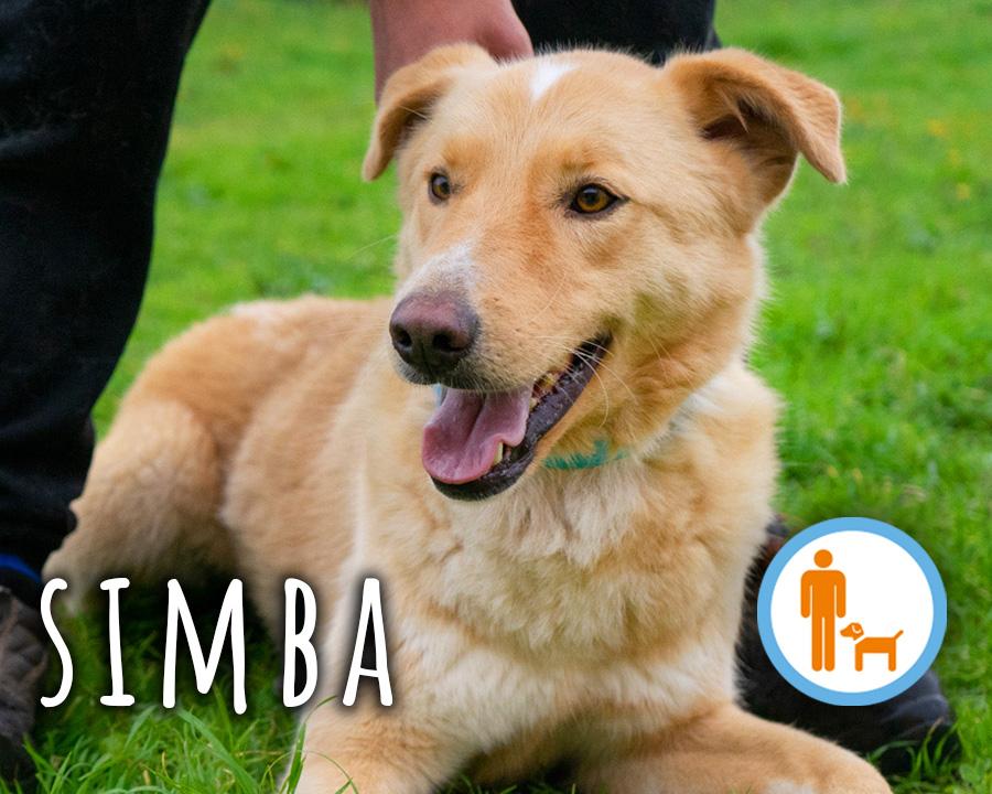 Simba_profilo