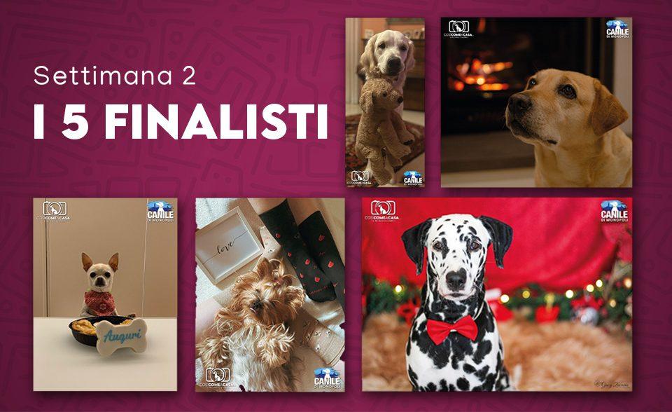 profilo_finalisti_settimana 2