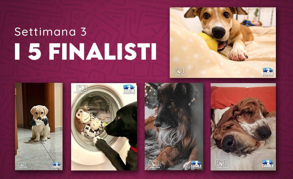 profilo_finalisti_settimana 3