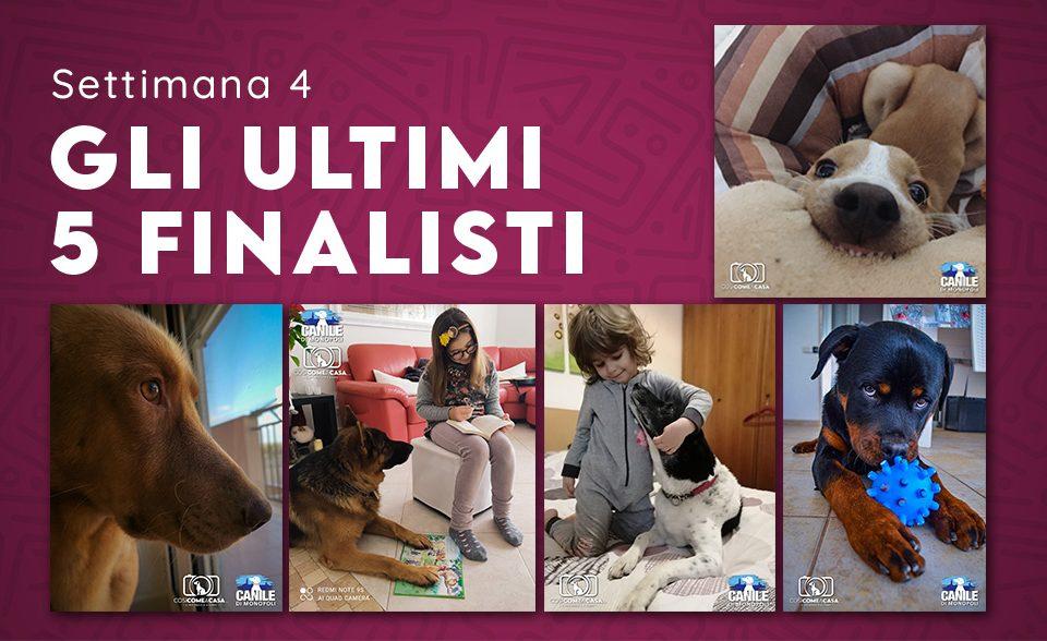 profilo_finalisti_settimana 4