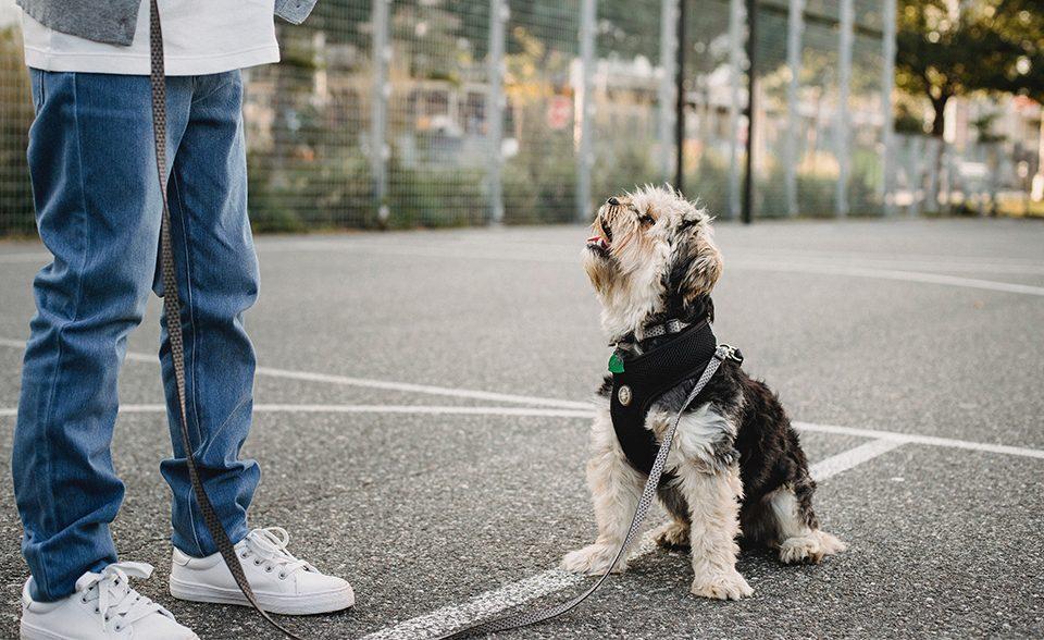 Cane a passeggio_foto articolo