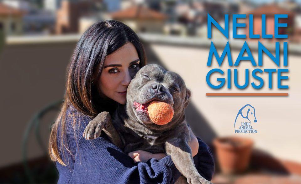 Profilo_NelleManiGiuste_LNDC