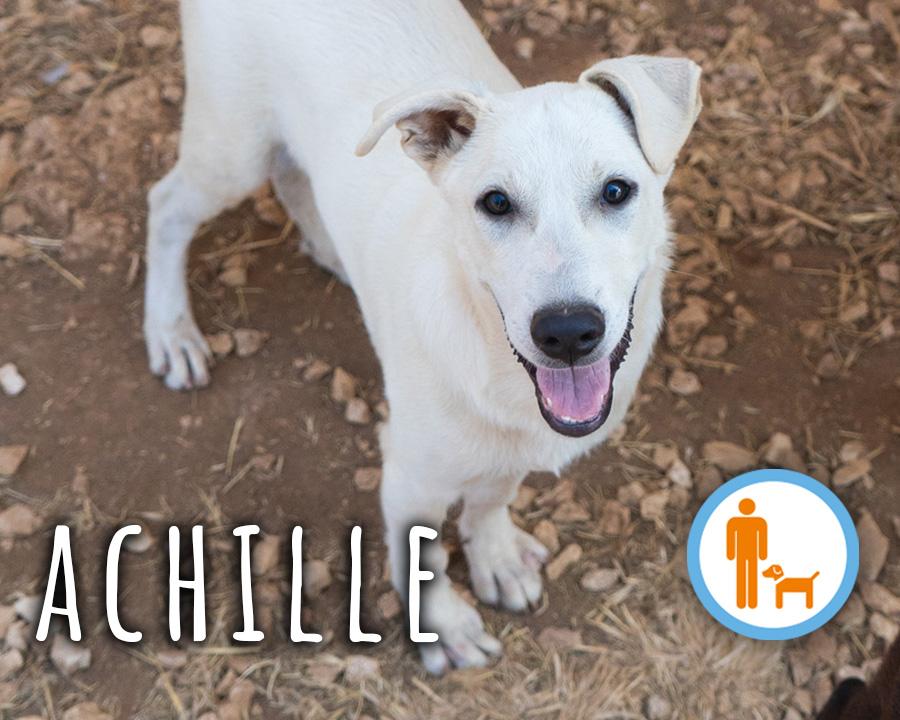 Achille_profilo