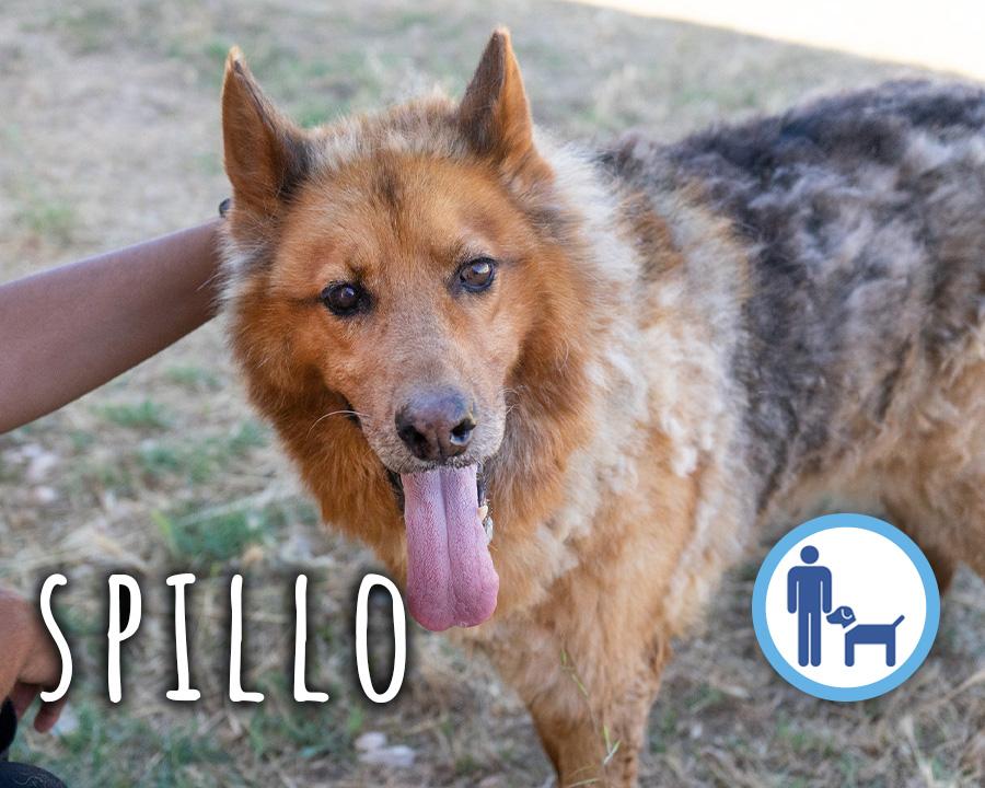 Spillo_profilo_1