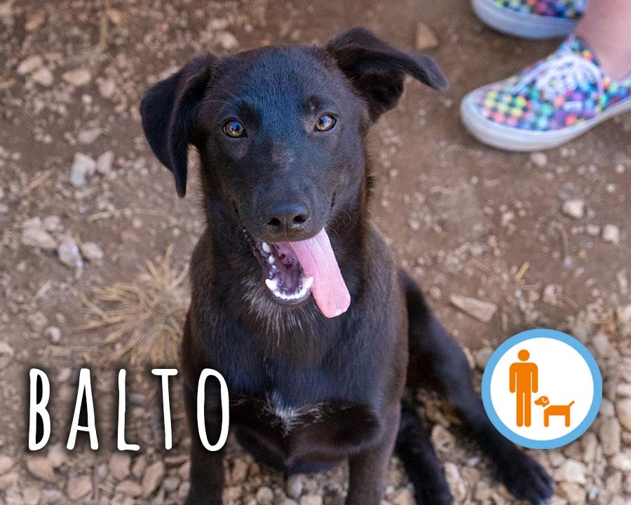 Balto_profilo_1