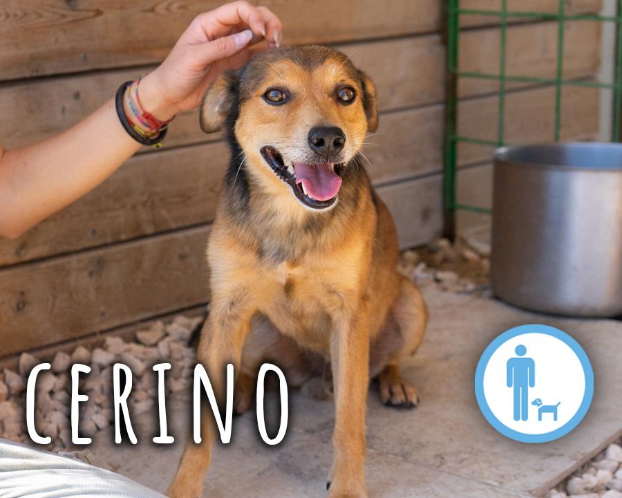 Cerino_profilo