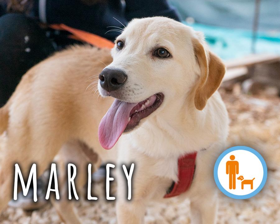CuccioloMarley_profilo