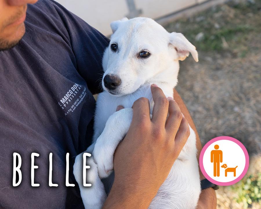 Belle_profilo