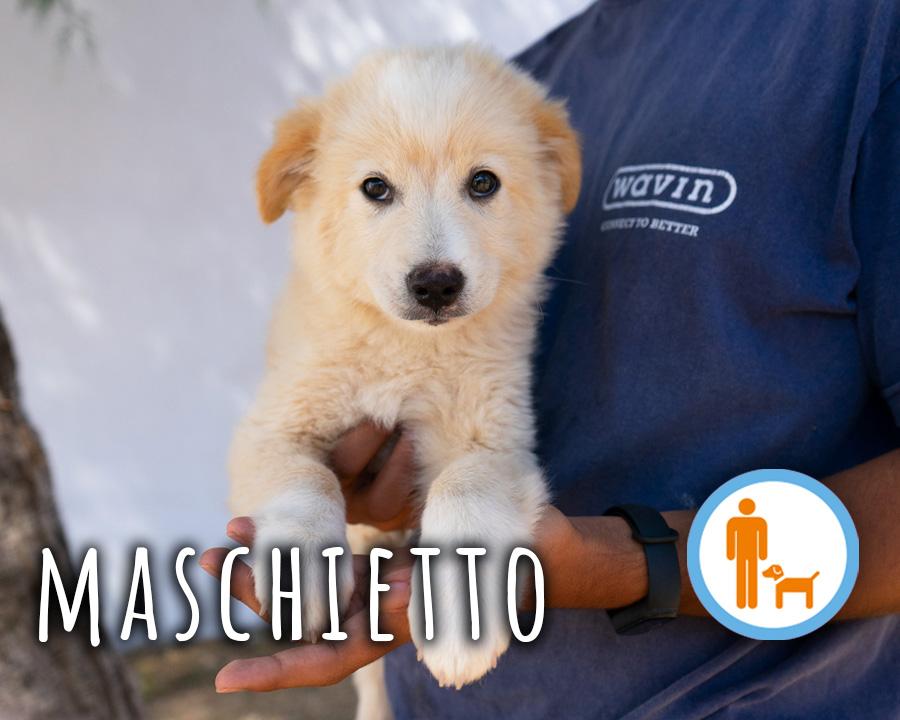 Maschio_1_profilo