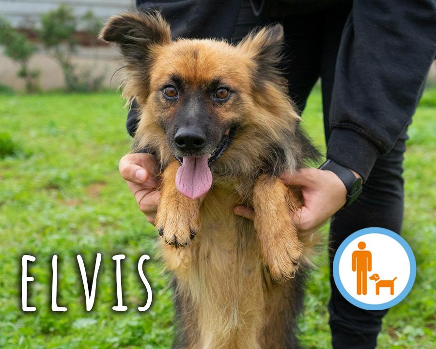 Elvis_profilo